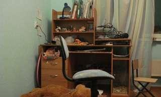 Para Observadores: ¿Puedes encontrar el gato?
