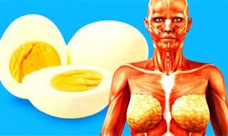 ¿Qué Te Sucedería Si Consumieras Dos Huevos Al Día?