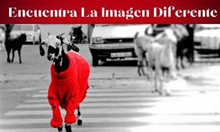 Test: Encuentra La Imagen Diferente a Las Demás