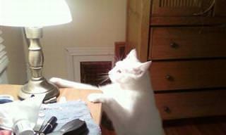 Fotos Que Muestran Que Los Gatos Pueden Ser Tan Perversos...