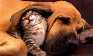 Amistades Entrañables: Perros y Gatos Los Mejores Colegas