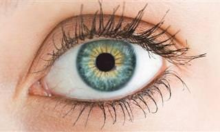 5 Nutrientes Para Que Tus Ojos Se Mantengan Jóvenes