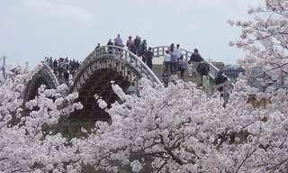¡La Espectacular Belleza Floral De Ashikaga!