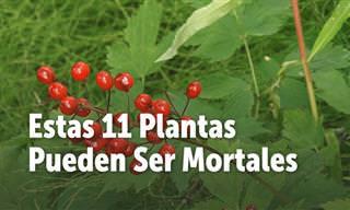 Mantente Alejado De Estas 11 Plantas Mortales