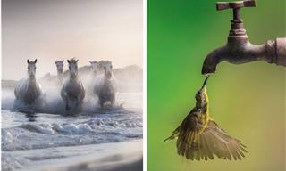 15 Poderosas Fotos De Concurso Que Capturan La Belleza De La Naturaleza