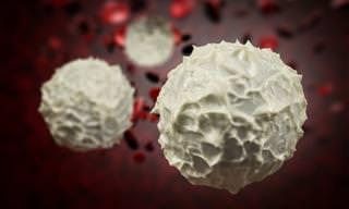 Ciencia: Completa Información Sobre Los Glóbulos Blancos
