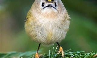 Estas Aves De Aspecto Enojado Te Harán Sonreír