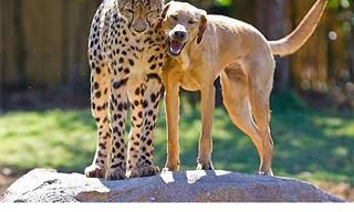 Antes y Después: Animales Que Conservan Sus Viejos Amigos