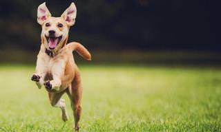 Chiste Del Día: Un Perro Católico