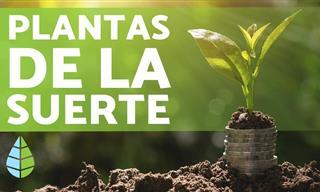 Estas Plantas Atraen El Dinero, Felicidad y Bienestar