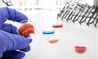 Avances Científicos Sobre La Elaboración De La Carne En Laboratorios