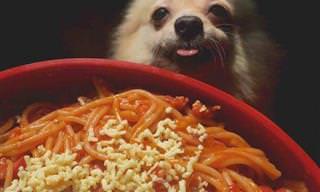 Perros Divertidísimos Pidiendo Un Poquito De Comida