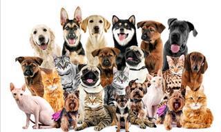Test: ¿Qué Tanto Sabes Sobre Los Perros?