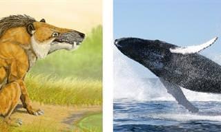 Cómo Cambiaron Estos 15 Animales Con El Tiempo