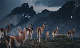 Majestuosas Fotografías De La Vida Salvaje En La Patagonia