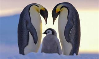 A Los Animales También Les Encanta Posar En Familia