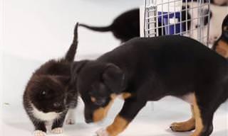 12 Videos De Animales Que Se Acaban De Conocer
