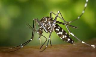 Evita La Propagación Del Mosquito Del Dengue