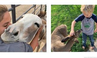 Estas Amistades Entre Humanos y Animales Nos Demuestran Un Gran Amor