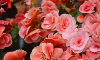 Estas 7 Lindas Flores Perfuman Tu Hogar De Manera Natural