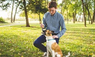 Chiste: Un Perro En Una Agencia De Talentos