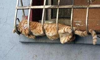 ¡Un Maravilloso Día De Gatos!