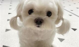 20 Imágenes De Los Cachorros Más Adorables Del Mundo