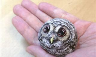 La Artista Que Transforma Piedras De Río En Animales