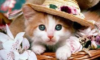¡Por Fin Llegó El Día De Los Gatos!