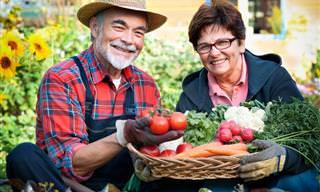 La Jardinería Tiene Grandes Beneficios Para Tu Bienestar