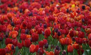 Tiempo De Flores: Destinos Para Descubrir Esta Primavera