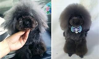 ¡Guau! El Talento De Este Peluquero Canino Es De Otro Mundo