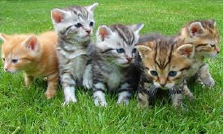 Video: 10 Enteros De Minutos De Adorables Gatitos