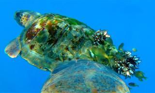 ¡Nunca Antes Habías Experimentado El Océano De Esta Forma!