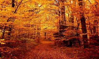 20 Bosques Llenos De Misterio y Encanto