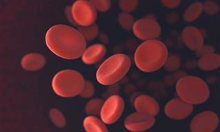 10 Datos Curiosos Sobre La Sangre Que No Conocías