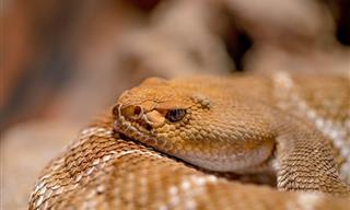 Este Olor Puede Significar Serpientes En Tu Hogar
