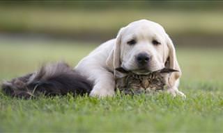 Esto Pasa Cuando Un Perro Quiere Ser Amigo De Un Gato