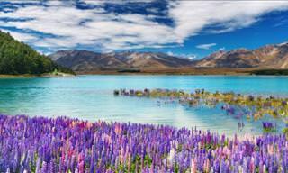 Volando Sobre La Belleza De Nueva Zelanda