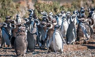 Chiste: Los Pingüinos Van Al Zoológico