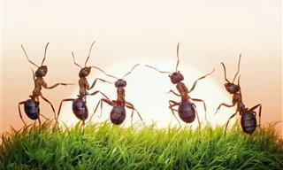 Chiste: El Hombre Que Soñaba Con Hormigas