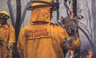 Imágenes Inspiradoras De Animales Australianos Rescatados De Los Incendios