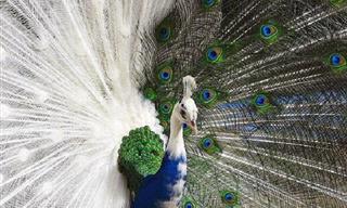 ¡Admira El Asombroso Poder y La Belleza De La Naturaleza!