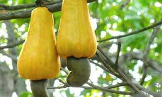 10 Frutos Que Nunca Has Visto Antes De Madurar