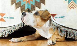 9 Claves Para Identificar Si Tu Perro Se Siente Estresado