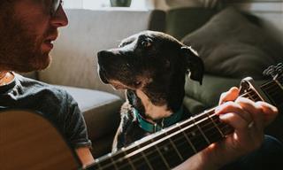Estas Historias Demuestran Por Qué Tener Mascotas Es Un Regalo