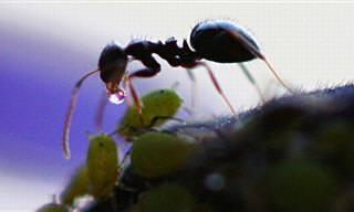 Jamás Pensé Que Una Hormiga Tuviera Tantos Secretos