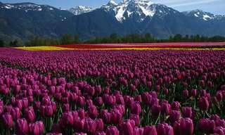 ¡La Bella Estación de Los Tulipanes!