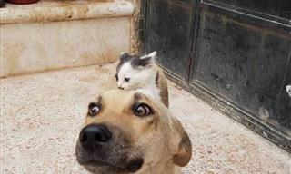¡Los Perros y Los Gatos También Pueden Ser Amigos!