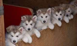 ¡Hoy Le Tocó a Estos Adorables Cachorritos!